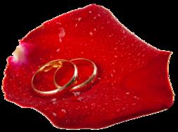 253x187 Wedding Rings In Rose Petal Png Clip Art