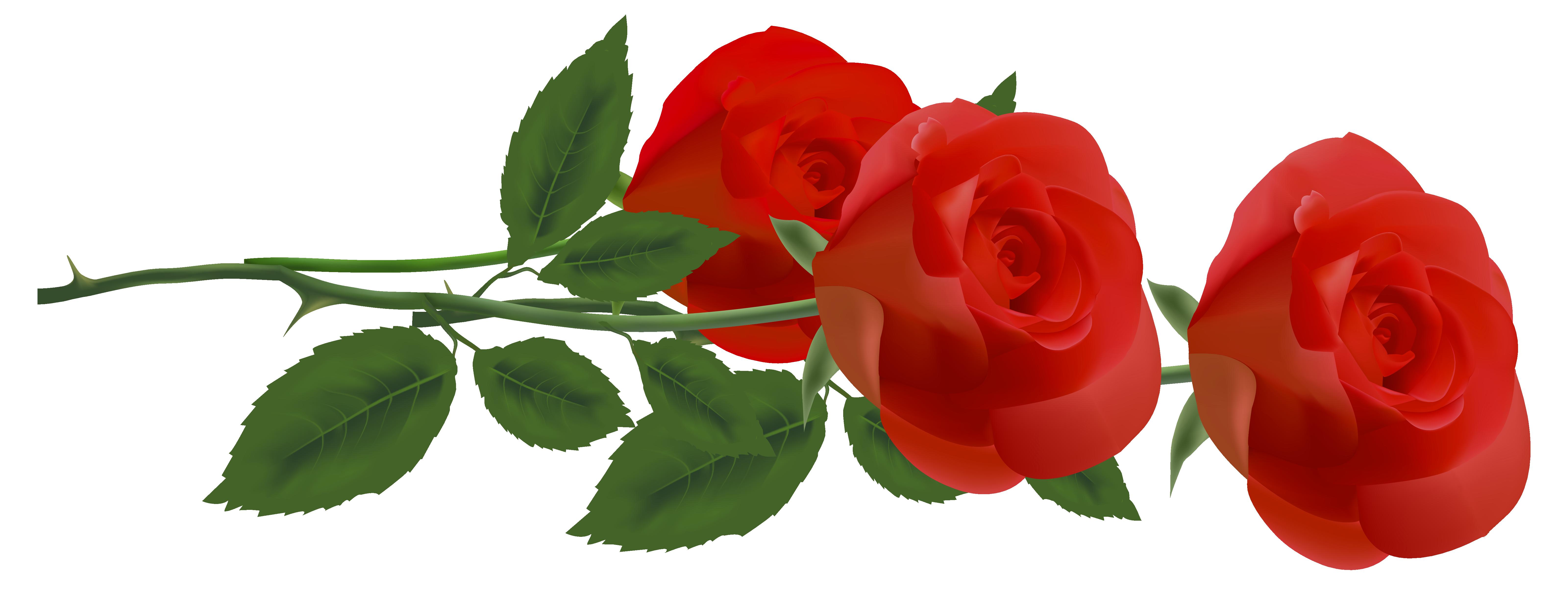6399x2464 Top 75 Roses Clip Art