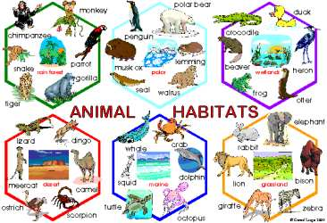 366x250 Clipart Of Animal Homes