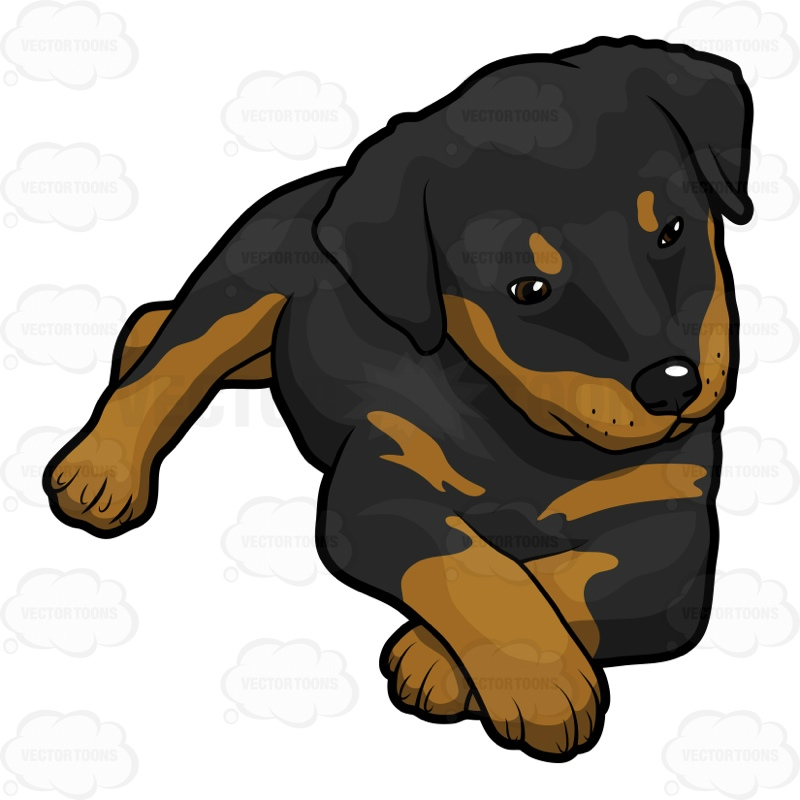 rottweiler clipart at getdrawings com free for personal use rh getdrawings com rottweiler clip art images rottweiler clipart black and white