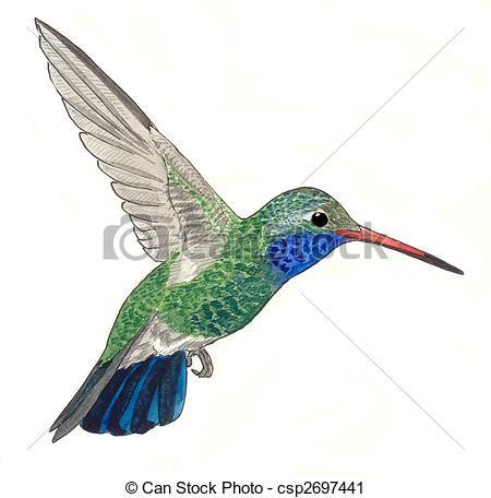 450x456 Free Hummingbird Clipart Of Broad Billed Hummingbird