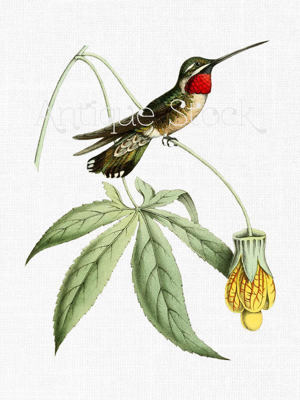600x800 Hummingbird Clip Art