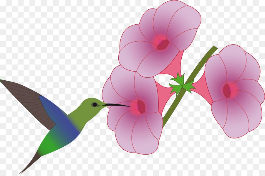 900x600 Hummingbird Flower Drawing Clip Art