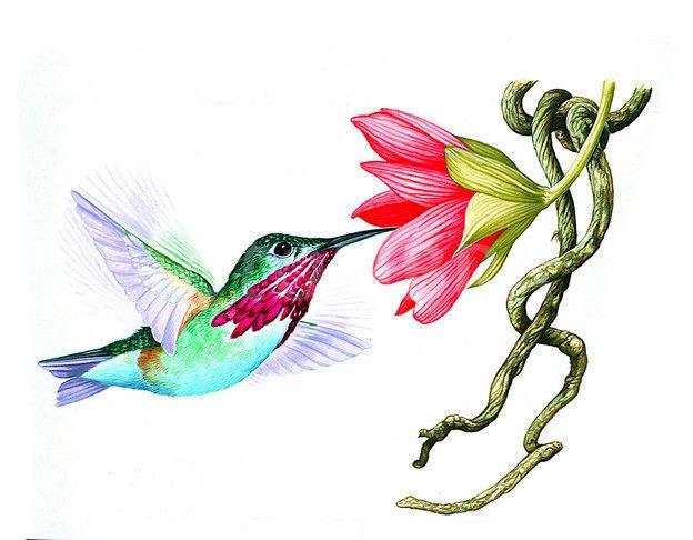 624x486 Ruby Throated Hummingbird Clip Art Ruby Throated Hummingbird