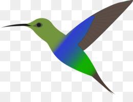 260x200 Broad Tailed Hummingbird Ruby Throated Hummingbird Clip Art