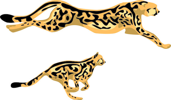 700x409 Running King Cheetah Wall Mural We Live To Change