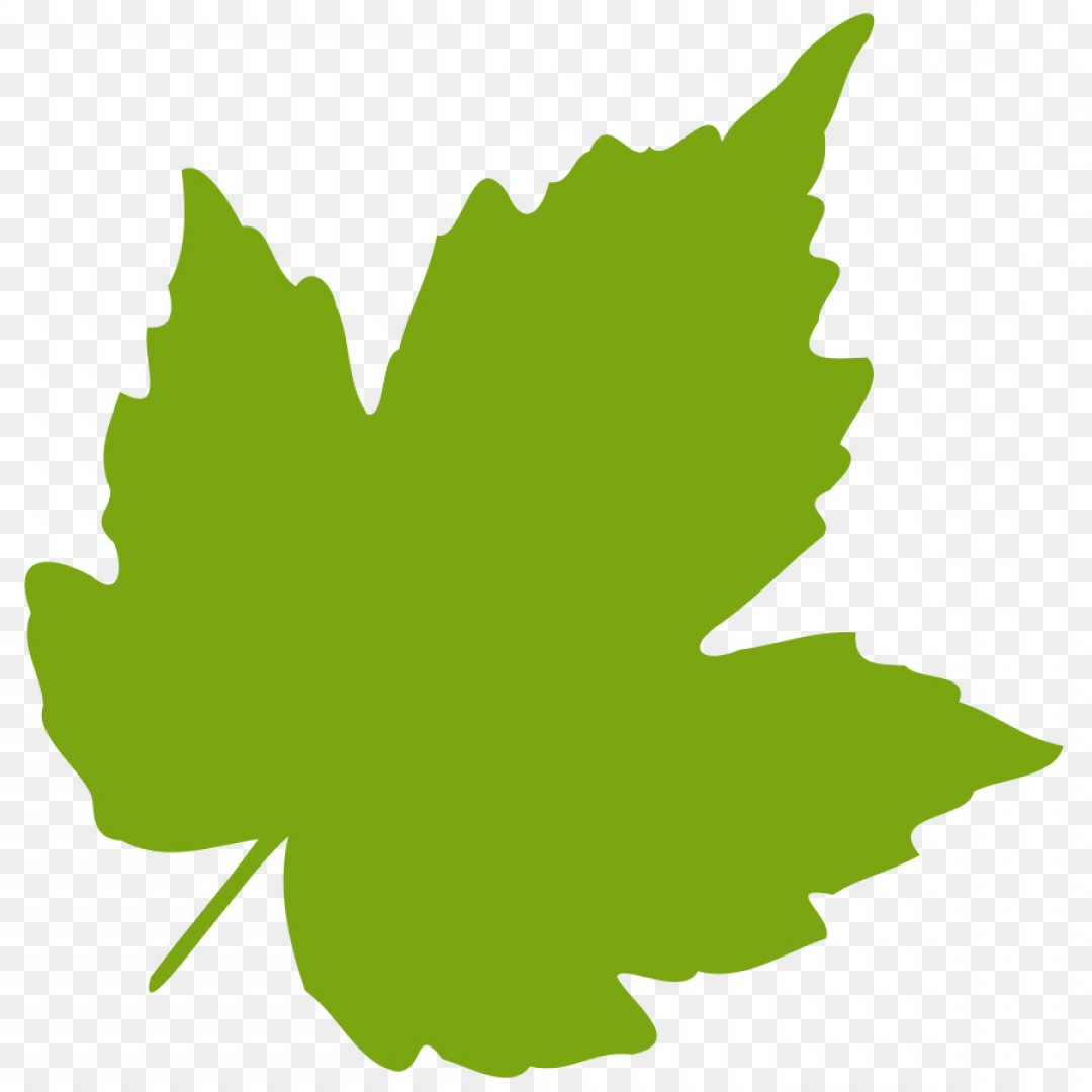 1080x1080 Png Grape Leaves Clip Art Oak Leaf Vector Sohadacouri