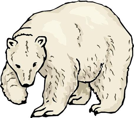 455x400 Top 83 Polar Bear Clipart