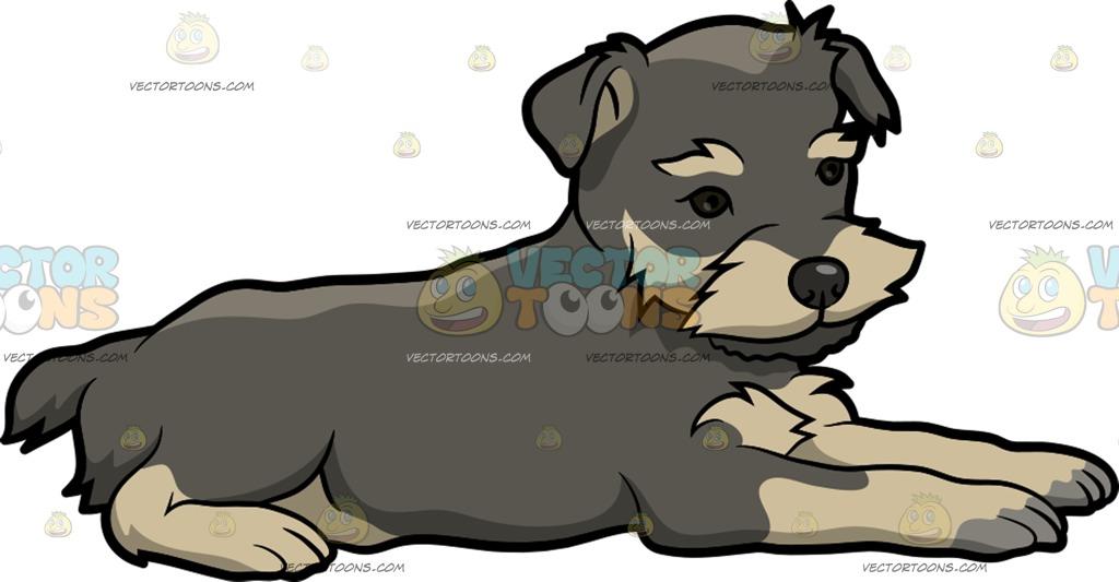 1024x533 A Lovely Miniature Schnauzer Puppy Cartoon Clipart Vector Toons