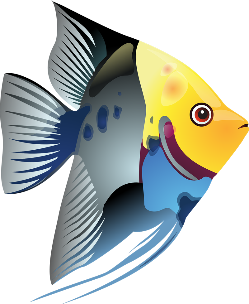 school of fish clipart at getdrawings com free for personal use rh getdrawings com images of a school of fish clipart school of fish clipart free