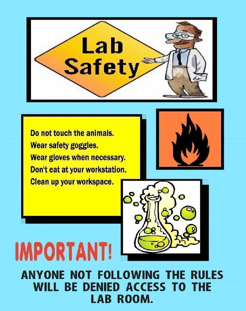 790x1000 Make A Science Fair Project About Science Lab Safety Science Lab