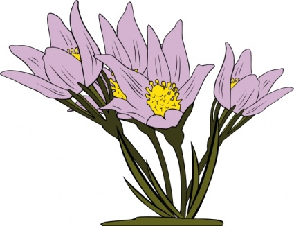 425x326 Free Download Of Anemone Patens Clip Art Vector Graphic