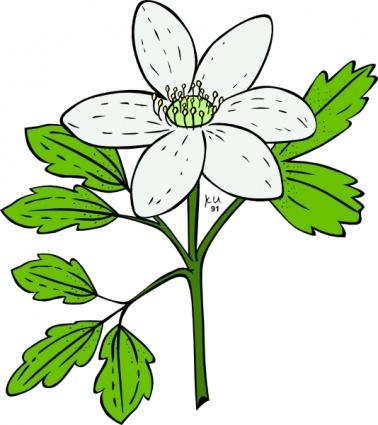 378x425 Anemone Piperi Windflower Clip Art Clip Arts, Clip Art