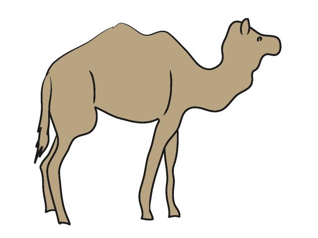 640x480 Camel Camel Animal Clip Art Free Material Illustration