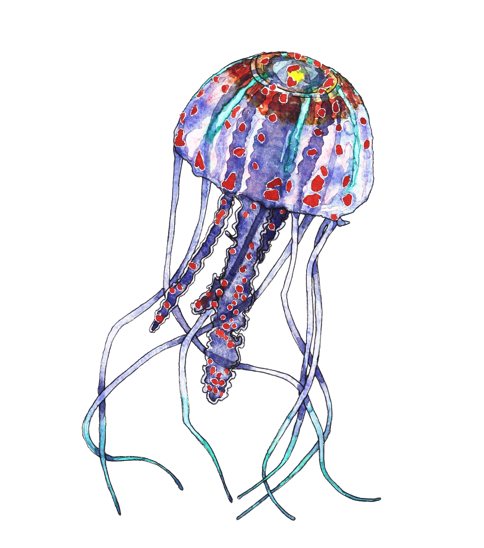 2647x3000 Jellyfish Clip Art, Sea Life Clipart, Marine Clip Art, Watercolor