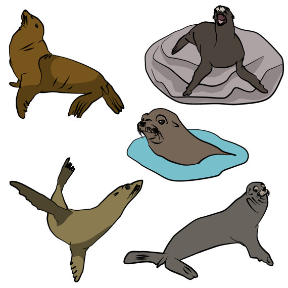 sea lion clipart at getdrawings com free for personal use sea lion rh getdrawings com baby sea lion clipart sea lion swimming clipart