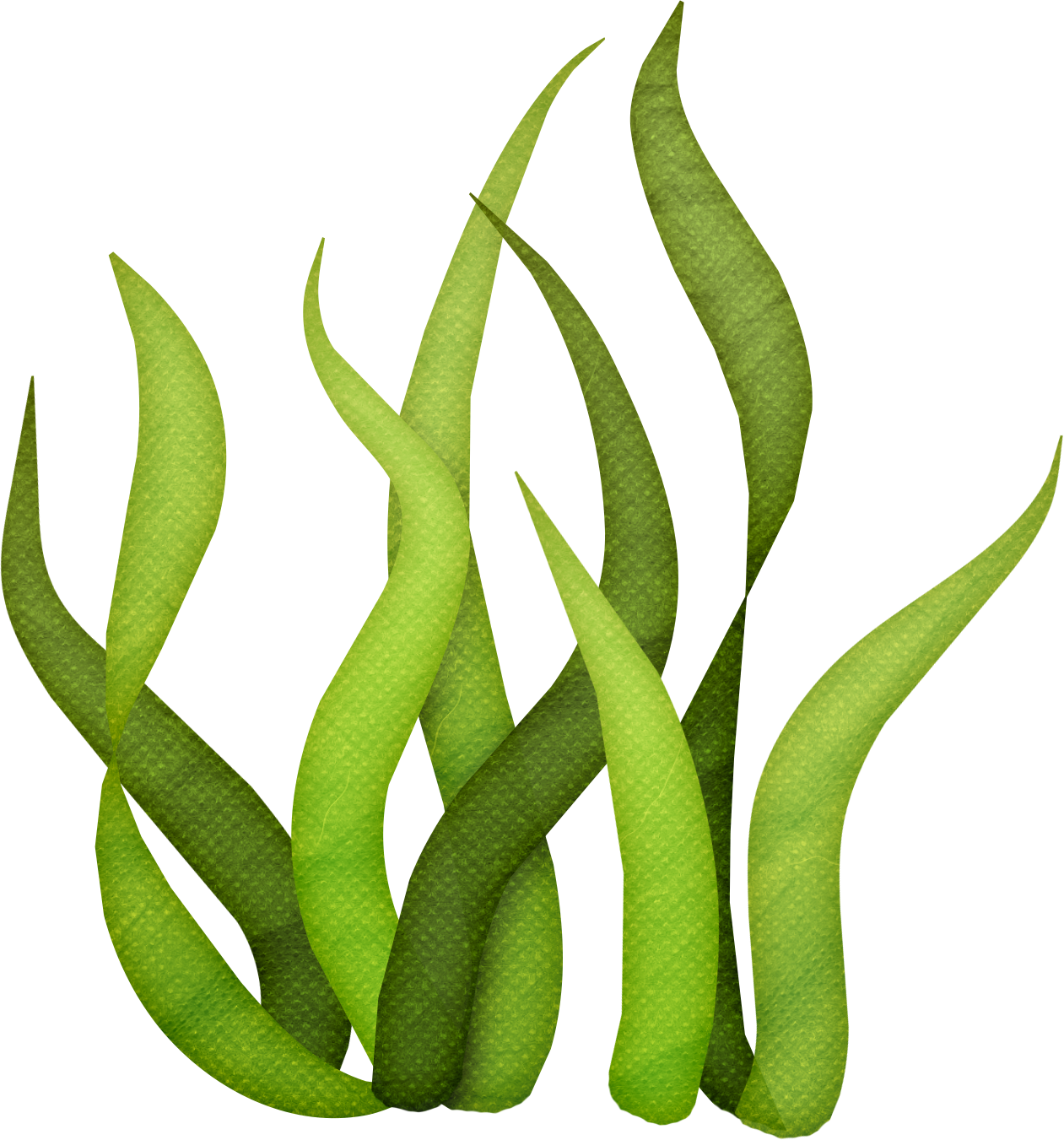 sea plants clipart at getdrawings com free for personal spring clip art free free spring clipart backgrounds