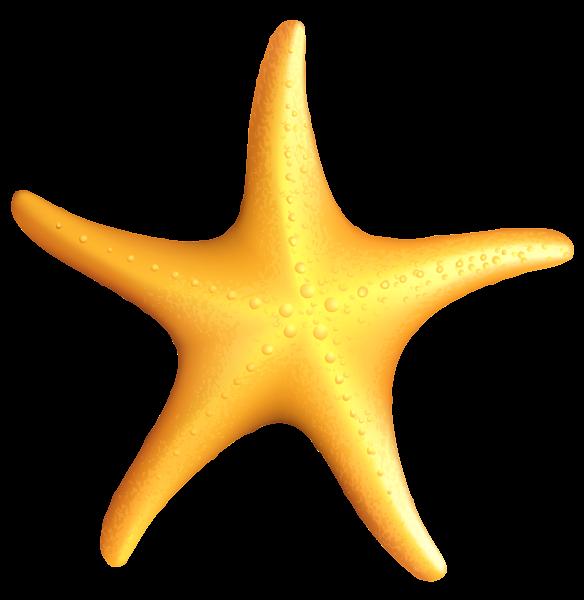 584x600 Pin By Marina On Mar Iii Starfish, Clip Art