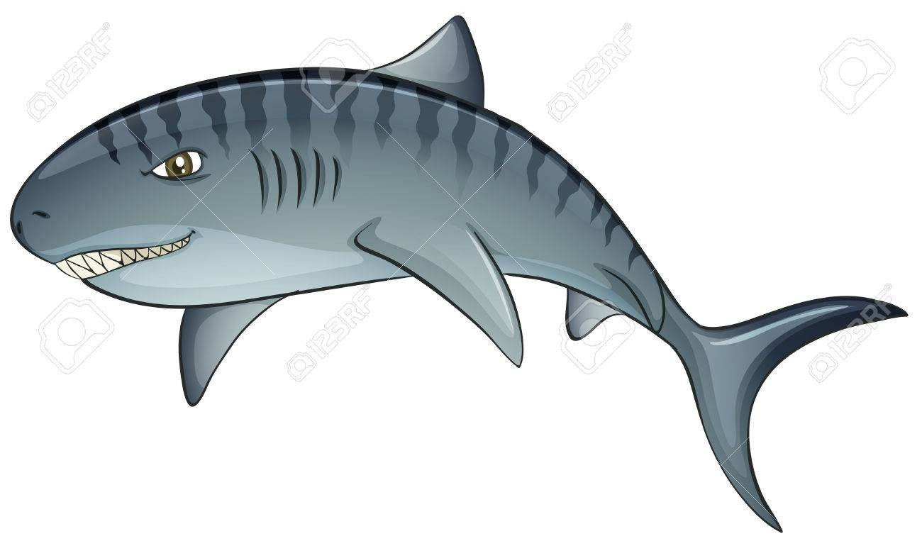 1300x763 Free To Share Tiger Shark Clipart Clipartmonk Clip Art Images