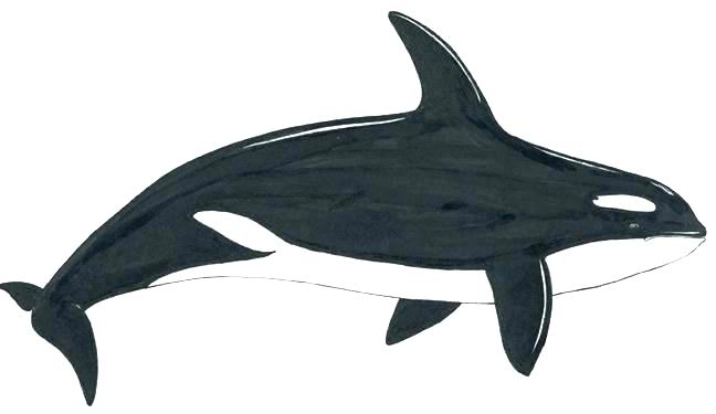 Shark Colouring Pages To Print at GetDrawings | Free download