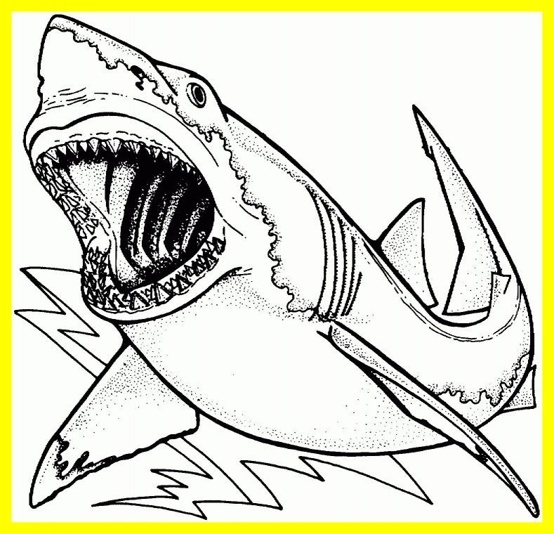 789x760 Stunning Megamouth Shark Coloring Page Printable Pict Of Trend