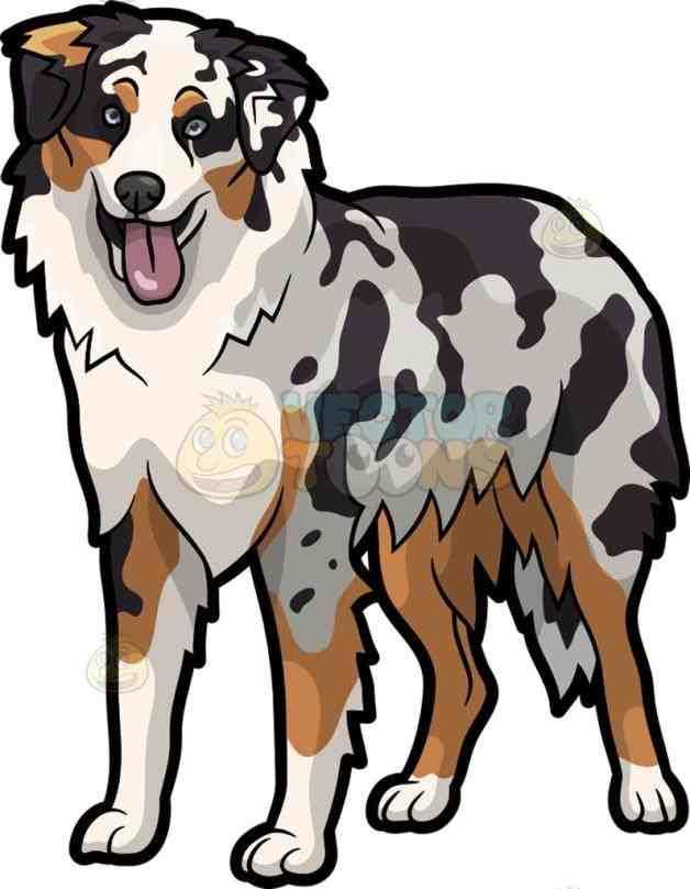 628x809 Australian Shepherd Dog Cartoon Clipart Vector Toons Dogs