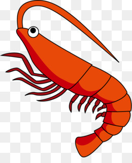 shrimp clipart at getdrawings com free for personal use shrimp rh getdrawings com shrimp clip art free shrimp clip art border