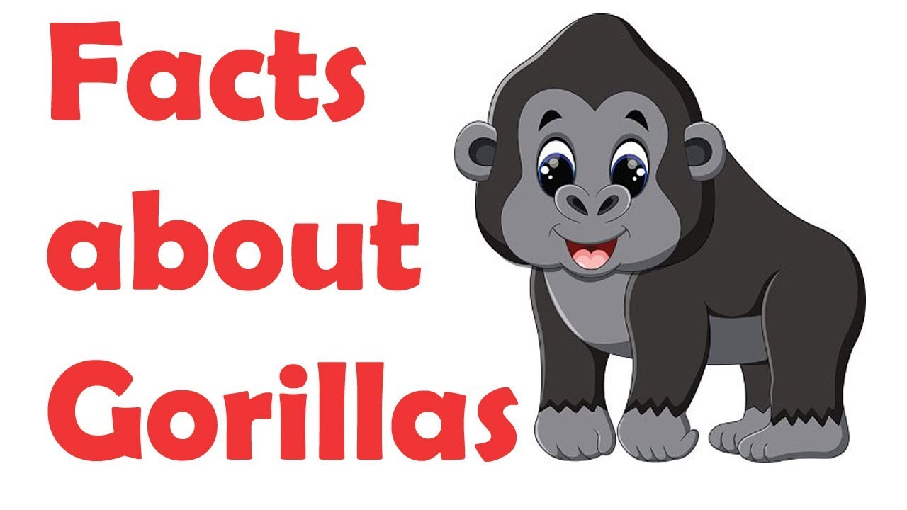 1280x720 Facts About Gorillas For Kids