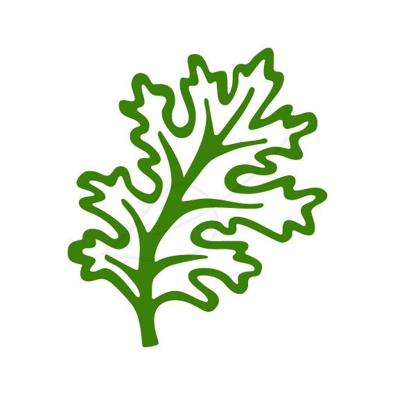 570x570 Kale Digital Stamp Clip Art I Love The Simple Clean Lines Of This