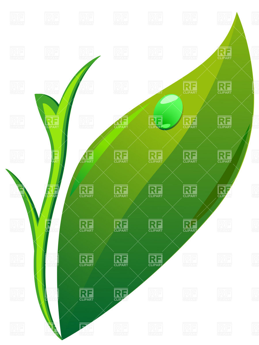 900x1200 Simple Green Leaf Royalty Free Vector Clip Art Image