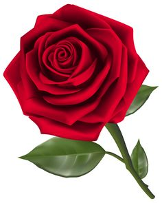 236x295 Red Rose Drawing Png Red Rose Png Clipart Image Roses