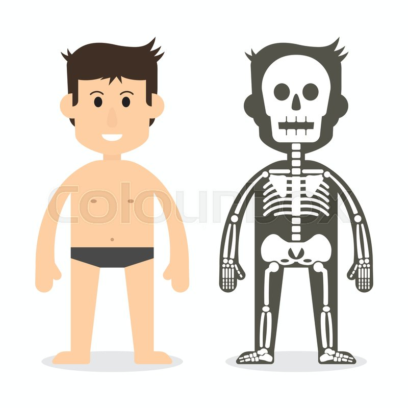 800x800 Human Body And Skeletal System ( Flat Design ) Stock Vector