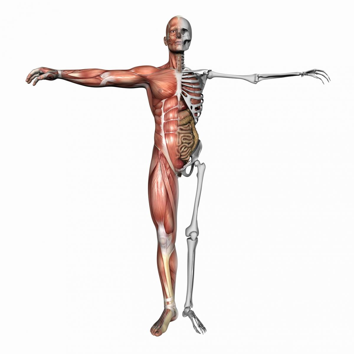 1200x1200 Musculoskeletal Pictures Group