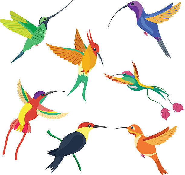 612x580 Tropical Bird Clipart Collection