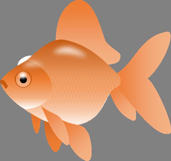 592x559 Image Of Goldfish Clipart