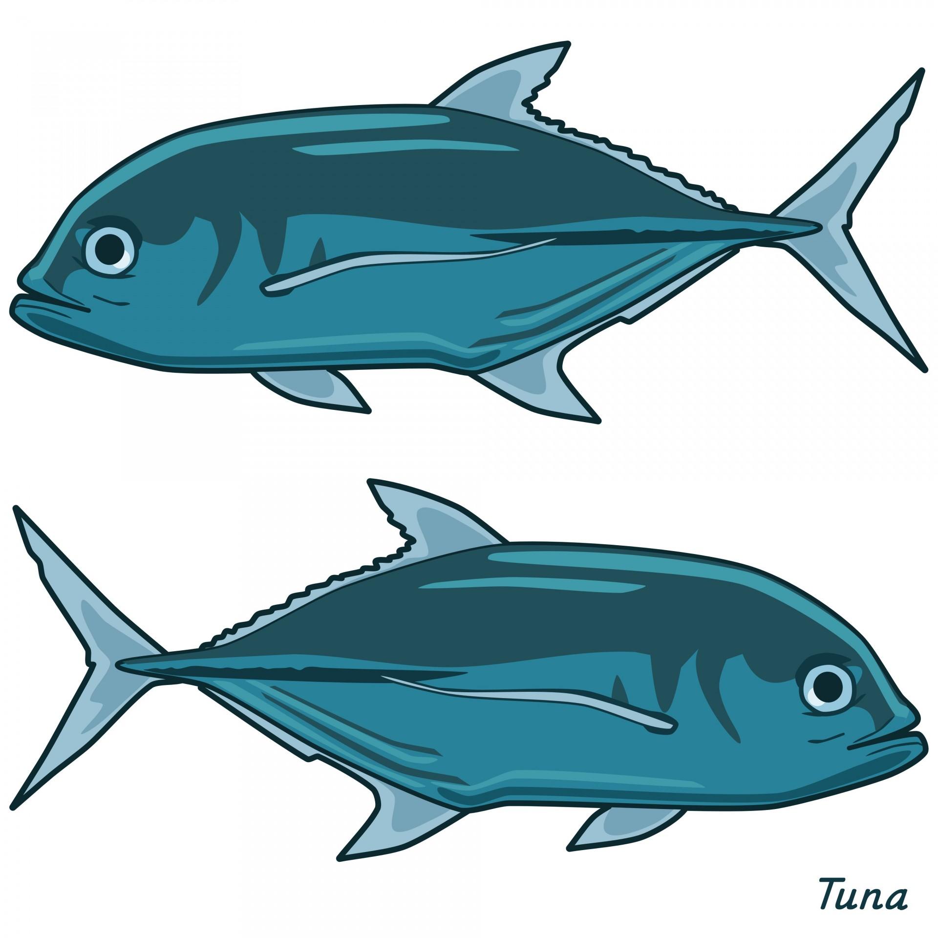 1920x1920 Tuna Clip Art Free Stock Photo