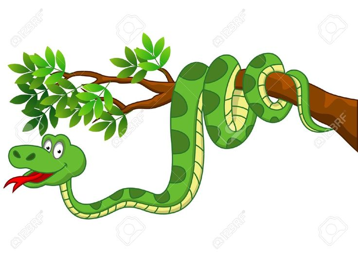 736x568 100 Best Cartoon Snakes Images On Snake, Snakes