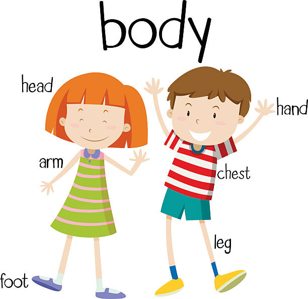 612x594 Human Body Clipart For Kids 15385493 Cartoon Boy And Girl