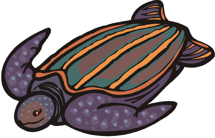 750x481 Free Turtle Clipart