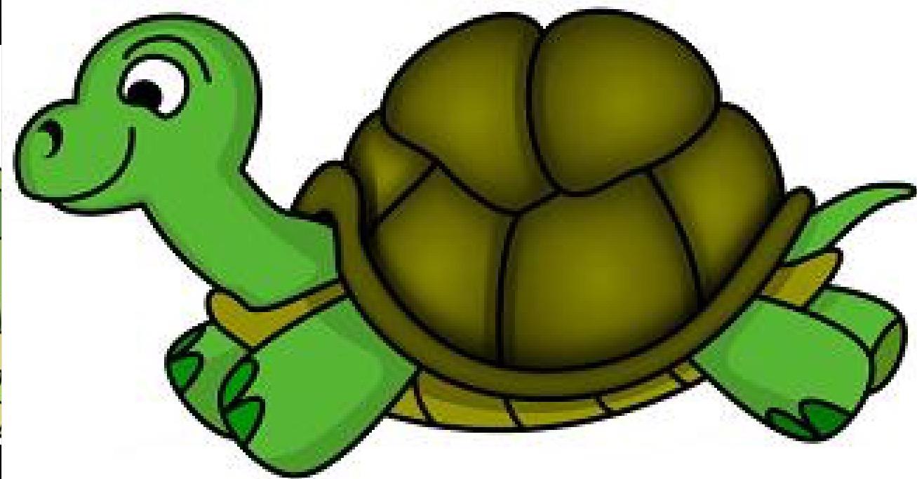1307x683 Tortoise Clipart Realistic