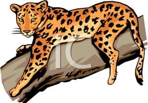 300x209 Jaguar Clipart Leopard