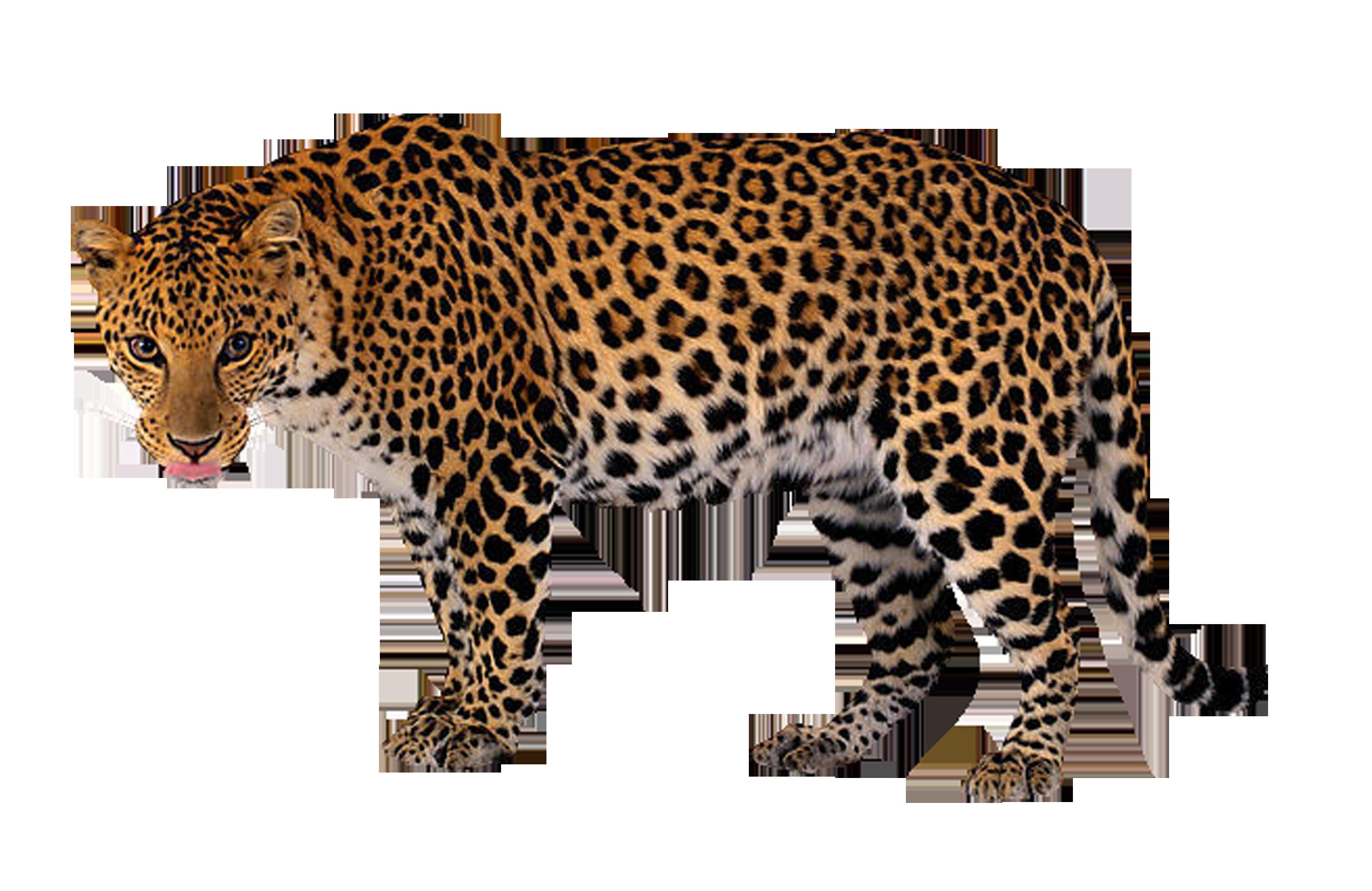 3023x1963 Leopard Clip Art