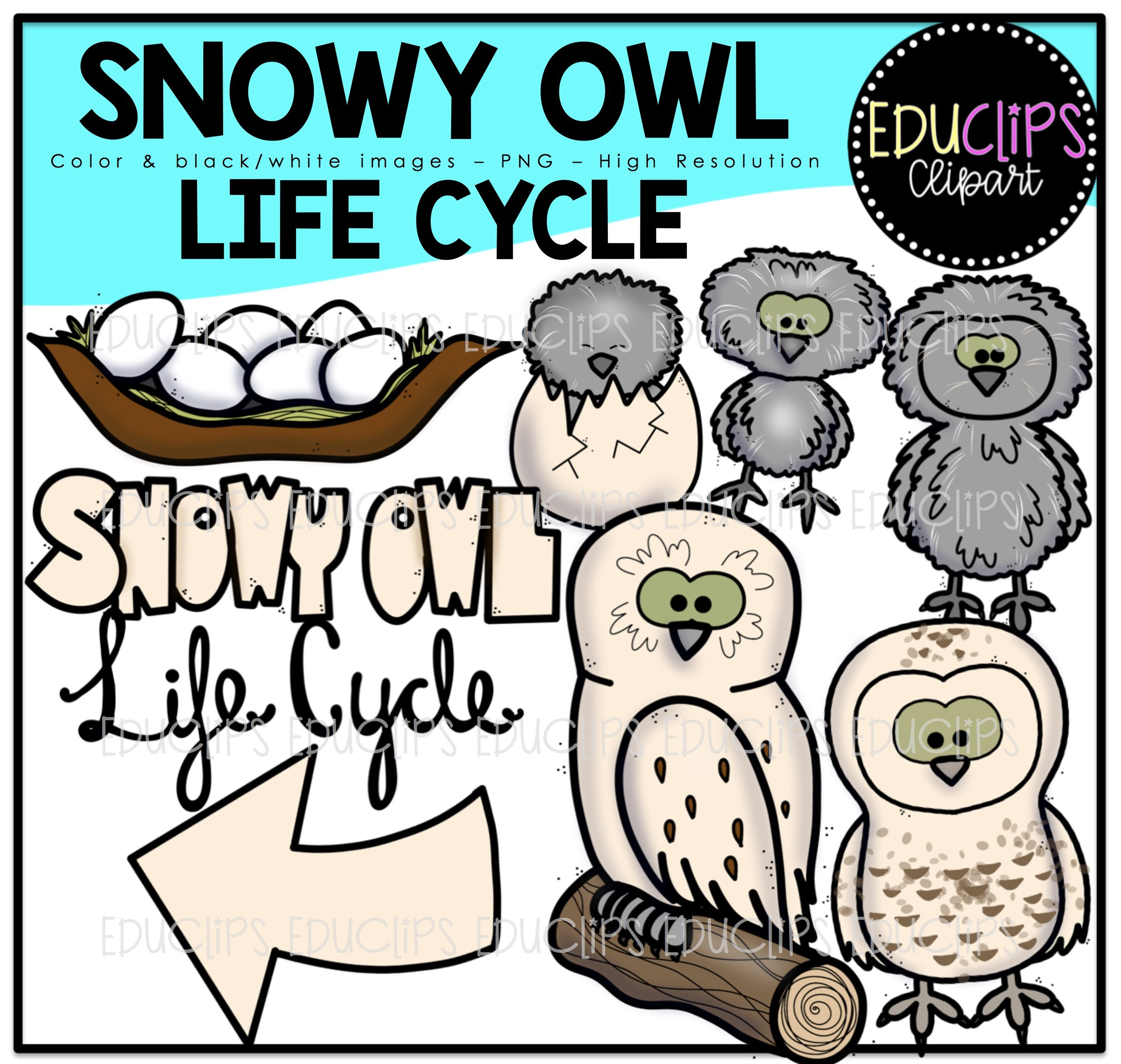 2582x2452 Snowy Owl Clip Art Bundle (Color And Bampw)