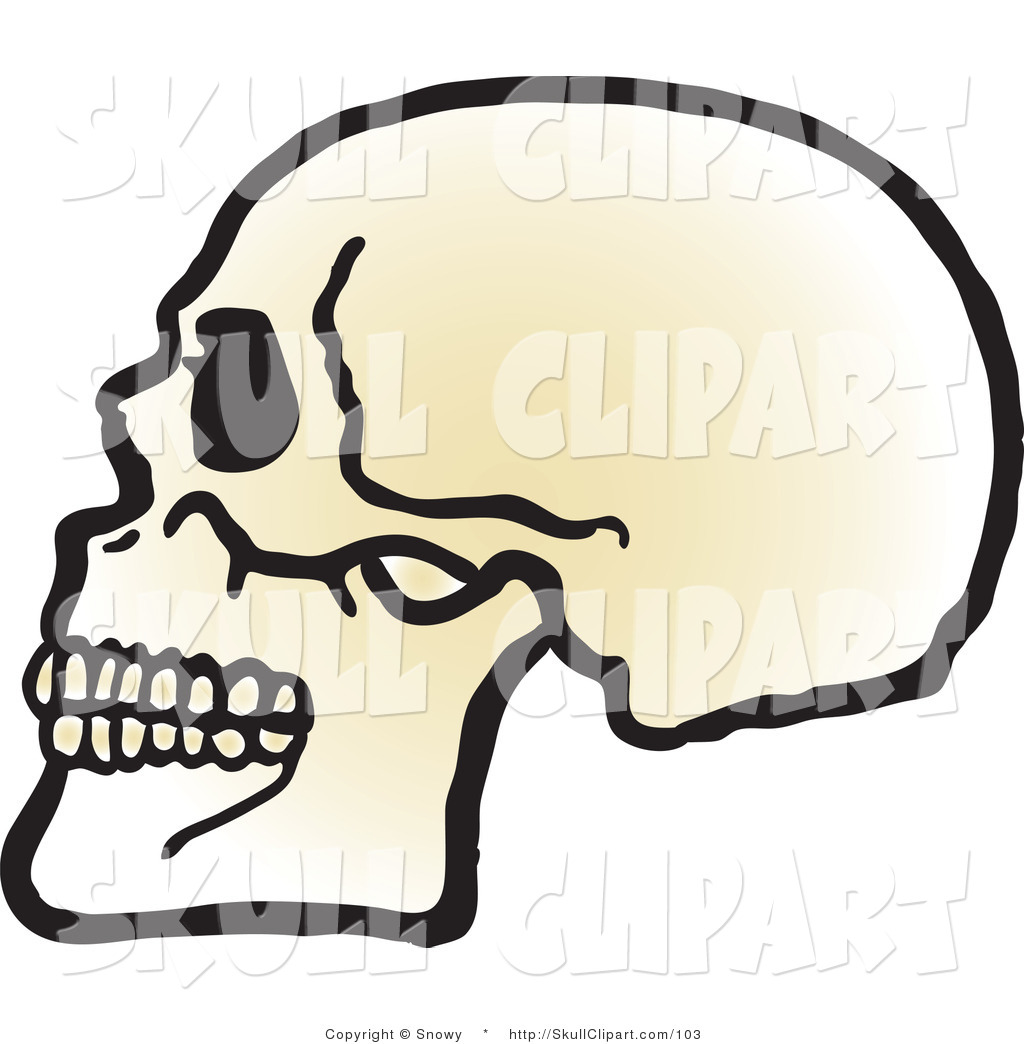 1024x1044 Vector Clip Art Of A Profiled Human Skull With Teeth Facing Left