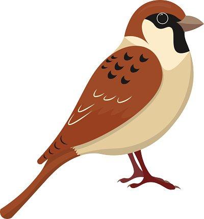 400x431 Cute Sparrow Cartoon Vector Stock Vectors