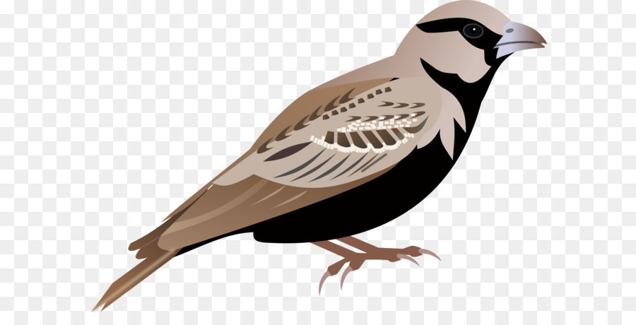 900x460 Lark Sparrow Clip Art