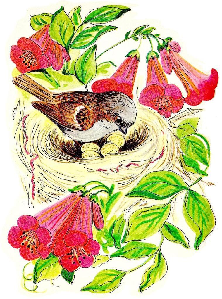 759x1023 Sparrow Clipart Sparrow Nest