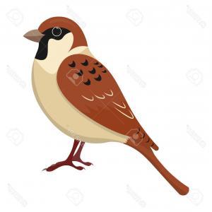 300x300 Stock Illustration Cartoon Sparrow Vector Illustration Clipart