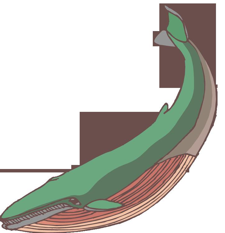 723x750 Free Whale Clipart