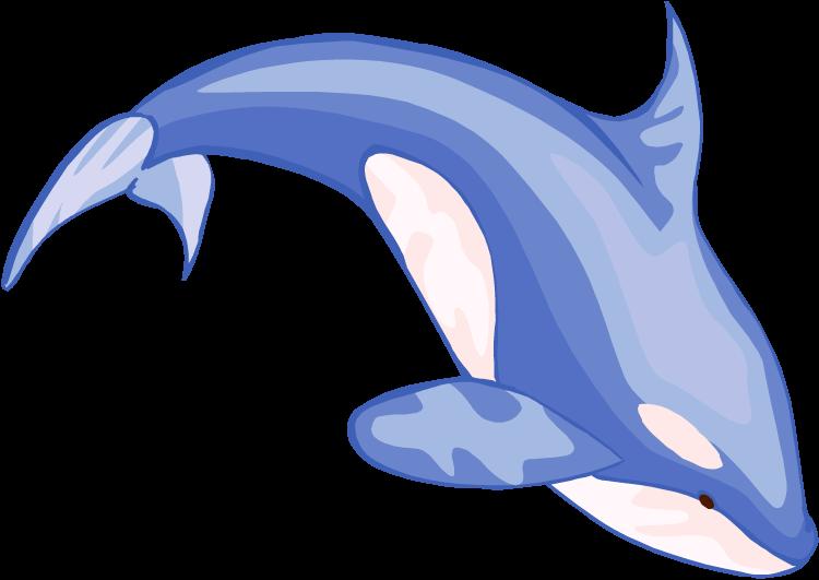 750x531 Orca Cliparts